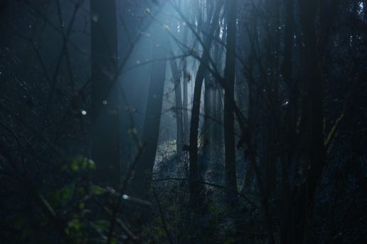backlit-dark-dawn-environment-289367
